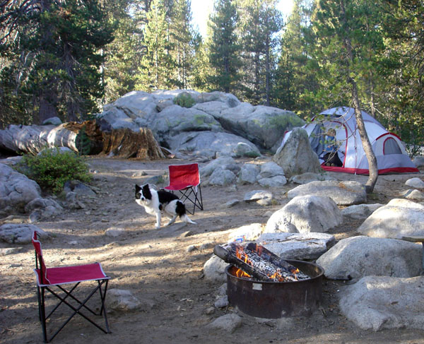 Border Collie Camping