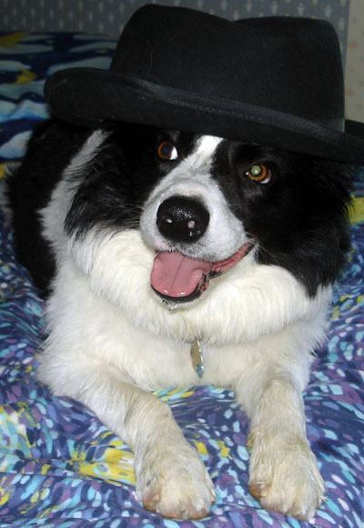 Famous Border Collie